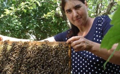apicultoare