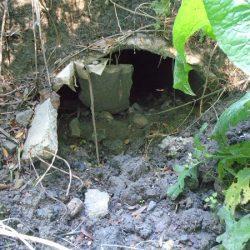 """Pe aici iese apa și """"curge"""" în pădure"""