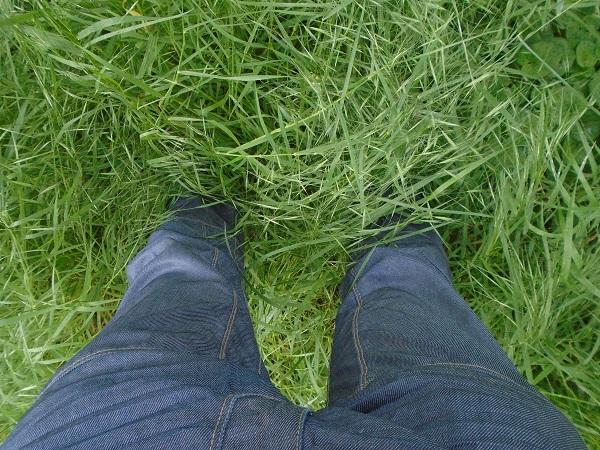 iarba mare