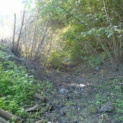 Vegetația crescută pe malurile canalului colector al apei pluviale, de-a lungul străzii N. Bălcescu până la intrarea în pădure, creează un aspect de savană