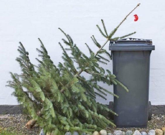 Cum scăpăm de brazii de Crăciun? Sunt colectați după un program stabilit de primărie. Află în ce zi se ajunge pe strada ta