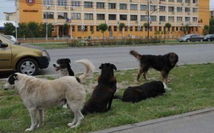 Oamenii de știință au descoperit un nou tip de coronavirus, care provine de la câini
