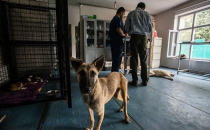 Câini și pisici evacuați din Afganistan