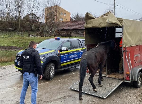 Cal maltratat, salvat de polițiști și dus la adăpost, în vestul țării