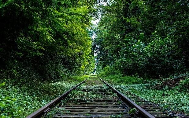 Urs fost lovit mortal de tren, între Armeniş şi Teregova