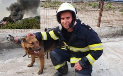 Orice viață contează! Câțel salvat în ultimul moment din mijlocul flăcărilor