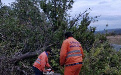 Copac doborât de vânt pe un drum din vestul ţării, trafic perturbat