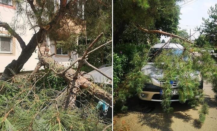 Copac căzut peste o mașină, la Timișoara