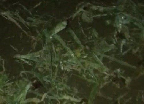 Video! Culturi distruse de grindină, la Sânnicolau Mare și în unele localități învecinate