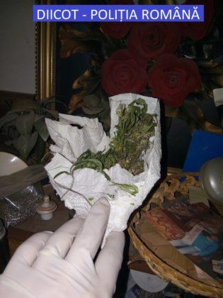 Cultură de droguri, descoperită la Arad. Trei tineri au ajuns după gratii