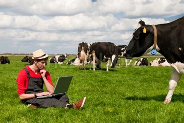 Micul fermier bănăţean, cu un plan bun, poate primi 15.000 de euro