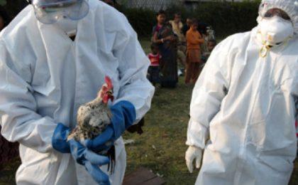 Gripă aviară în Timiș! Localităţile puse sub supraveghere
