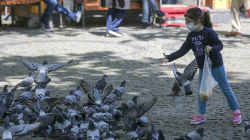 În Timișoara s-a interzis hrănirea porumbeilor! Acum, toate problemele oraşului sunt rezolvate