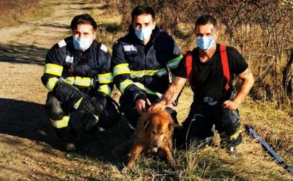 Încă un suflet salvat de pompierii timișeni!