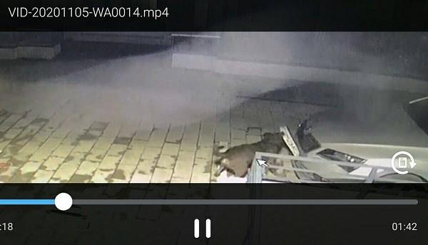 Un câine vagabond a vandalizat mașina unui timișorean. Video