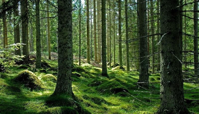 Statul român și-a pierdut o jumătate din păduri în ultimii 20 de ani
