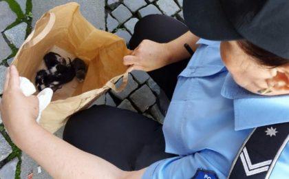 Amendat cu 3.000 de lei pentru că a abandonat cinci pui de pisică pe stradă