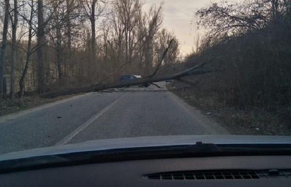 Pom căzut pe o șosea din vestul țării, trafic blocat