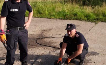 Un pui de căprioară a fost salvat de pompieri după ce a căzut într-un bazin cu ulei, în vestul țării