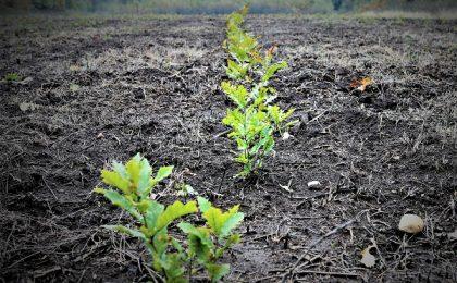 Romsilva a plantat aproape 22 milioane puieți în campania de împăduriri de primăvară
