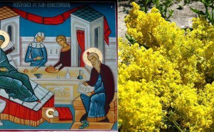 Astăzi prăznuim Naşterea Sfântului Ioan Botezătorul. Sărbătoarea e cunoscută la români şi sub numele de Sânziene sau Drăgaică