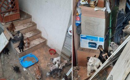 Dosar penal pentru rănirea sau schingiuirea animalelor. Câini și pisici, în condiții groaznice
