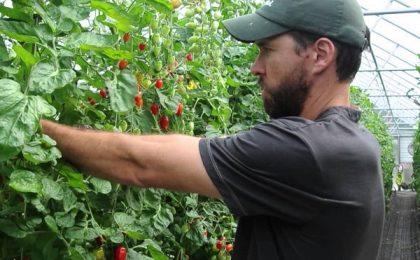 Condiții pentru obținerea noilor subvenții agricole